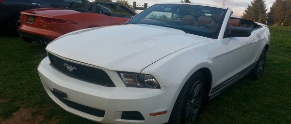 A white mustang.
